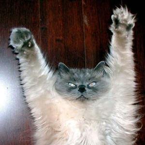 Yay cat
