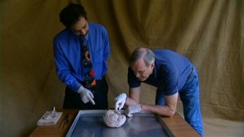 Human Face: John Cleese explores the brain