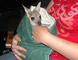 Wallaby Pocket