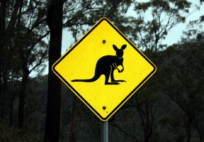 Rock Wallaby Sign
