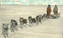 Prize dog team in the Arctic