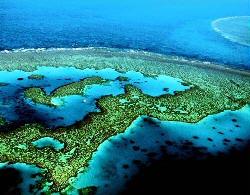 Japanese reefs